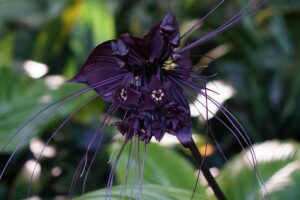 10 Most Rare Flowers In The World